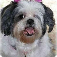 Adopt A Pet :: Annie - Dayton, OH