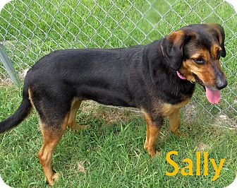 Labrador Retriever Mix Dog for adoption in Georgetown, South Carolina - Sally
