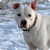 Adopt A Pet :: Contra - Cheyenne, WY