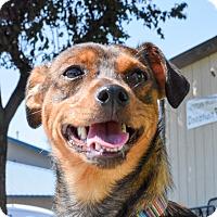 Adopt A Pet :: Lelo - Meridian, ID
