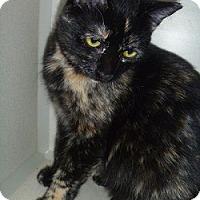 Adopt A Pet :: Sallie - Hamburg, NY