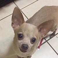 Adopt A Pet :: SEBASTIAN - Rancho Cucamonga, CA