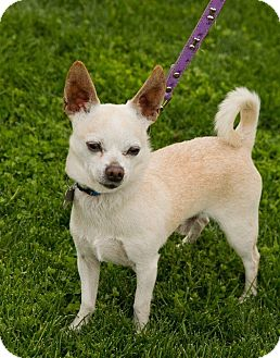 Terrier (Unknown Type, Small) Mix Dog for adoption in Scottsdale, Arizona - Mortimer
