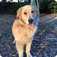 Adopt A Pet :: Dreamy - Corona, CA