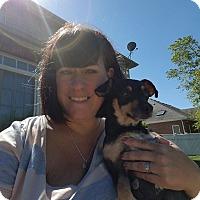 Chihuahua/Miniature Pinscher Mix Dog for adoption in Joliet, Illinois - Winnie