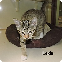 Adopt A Pet :: Lexie - Slidell, LA