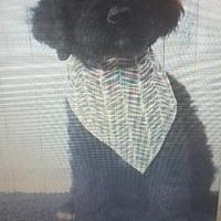 Adopt A Pet :: Higgins - Venice, FL