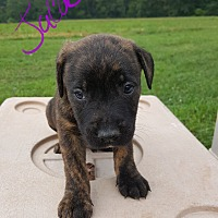 Adopt A Pet :: Jacob - Sussex, NJ