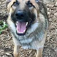 Adopt A Pet :: Nash - Minneapolis, MN