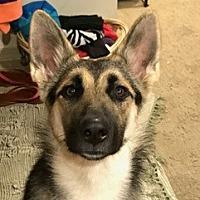 Adopt A Pet :: Jenny - Issaquah, WA