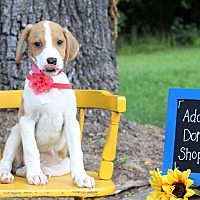 Adopt A Pet :: Bardwell - Waldorf, MD