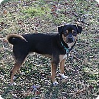 Adopt A Pet :: Chico - Hagerstown, MD