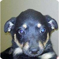 Adopt A Pet :: Ranger & Timber - Niceville, FL