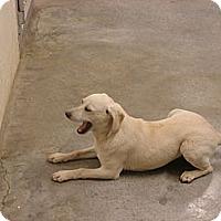 Adopt A Pet :: Molly - Fort Scott, KS