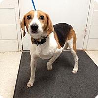 Adopt A Pet :: Joey - Lancaster, VA