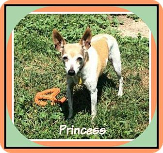 Rat Terrier Mix Dog for adoption in New Richmond,, Wisconsin - Princess