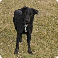 Adopt A Pet :: Mason - Lewisville, IN