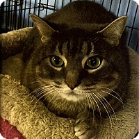 Adopt A Pet :: Skeeter - Medway, MA