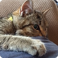 Adopt A Pet :: Leo & Bobcat - Horsham, PA