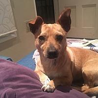 Adopt A Pet :: Grace - BONITA, CA