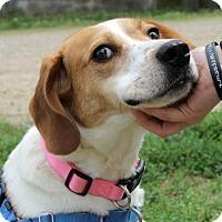 Adopt A Pet :: Glenda - Richmond, VA