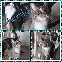 Adopt A Pet :: Sheriff - Cedar Springs, MI