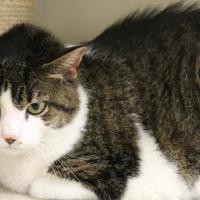 Adopt A Pet :: Dot - Hudson, NY