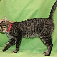 Adopt A Pet :: Zig Zag - Hillsdale, IN