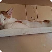 Adopt A Pet :: Billy the Kid - Atlanta, GA