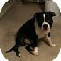 Adopt A Pet :: Harpua CP - Dayton, OH