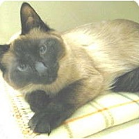 Adopt A Pet :: Black Paw - Mesa, AZ