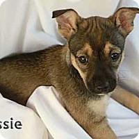 Adopt A Pet :: Jessie - Mission Viejo, CA