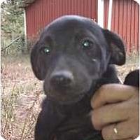 Adopt A Pet :: Mo - Salem, NH