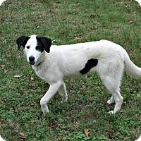 Adopt A Pet :: Roxie - Lufkin, TX