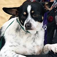 Adopt A Pet :: Chuck - Palmdale, CA