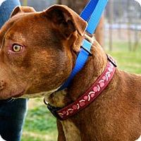 Adopt A Pet :: Roscoe - Erwin, TN