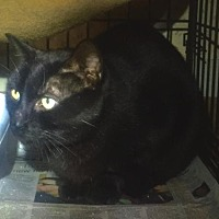 Adopt A Pet :: Charlie 3 - Stanhope, NJ