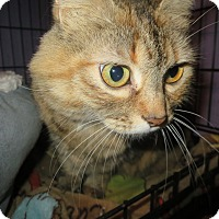 Adopt A Pet :: Ting a ling - Coos Bay, OR