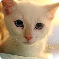 Adopt A Pet :: Marshmallow - Temecula, CA