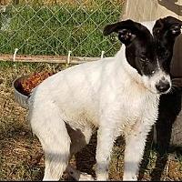 Adopt A Pet :: Kali - Odessa, TX