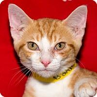 Adopt A Pet :: BONJOUR - Fernandina Beach, FL