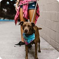 Adopt A Pet :: Basil - Claremont - Chino Hills, CA
