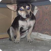 Adopt A Pet :: Jesse - House Springs, MO