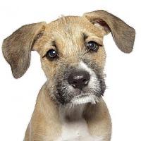 Adopt A Pet :: Ruby - oakland park, FL