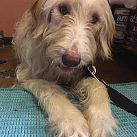 Adopt A Pet :: Becca - Plainfield, IL