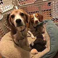 Adopt A Pet :: Vonny - Alpharetta, GA