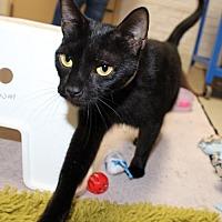 Adopt A Pet :: 25336 - Pepper - Ellicott City, MD
