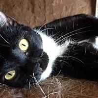 Adopt A Pet :: Fricka - Santa Fe, NM