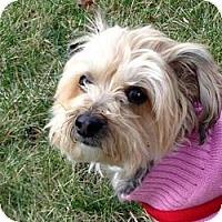 Adopt A Pet :: Lucy - Sheboygan, WI