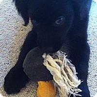 Adopt A Pet :: Chewey - Denver, CO